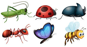 Different type of insects stock illustration