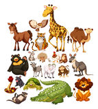 Different type of wild animals Stock Image