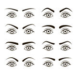 Different Type Woman Black Eyebrows Set. Vector Stock Photo