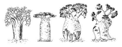 Different types of African baobab set royalty free stock photo