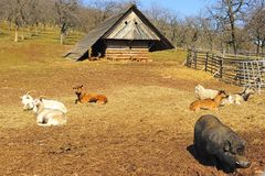 Animals on the farm. Different types of animals on the farm on a spring day Stock Photo