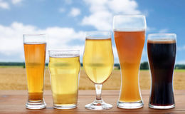 Different types of beer glasses over cereal field. Brewery, drinks and alcohol concept - different types of beer in glasses on table over cereal field and blue Royalty Free Stock Image