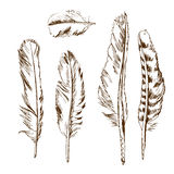 Different types of birds feather. Hand drawn different types of birds feather Stock Photography