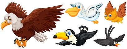 Different types of birds flying. Illustration Stock Images