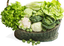 Different types of cabbage Stock Photography