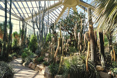 Greenhouse for cactus plants Stock Image