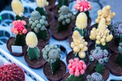 Different Types of Cactus Stock Images