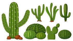 Different types of cactus. Illustration Stock Illustration