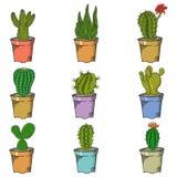Different Types of Cactus Stock Photo