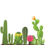 Different types of cactuses Stock Image