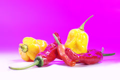 Different types of chili. Pink background Stock Photos