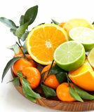 Different types of citrus fruits Royalty Free Stock Photography