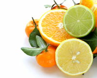Different types of citrus fruits Stock Photography