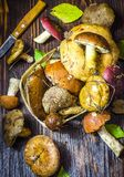 Different forest mushrooms just collected. Different types of only collected wild mushrooms on the table stock images