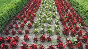Different types and colors of flowers on floral wall, beautiful garden, close-up.  stock video