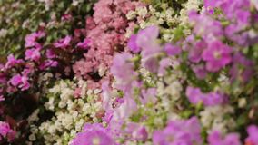 Different types and colors of flowers on floral wall, beautiful garden, close-up. Stock footage stock video