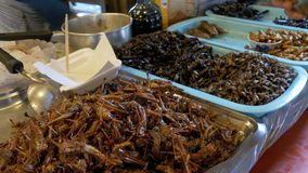 Different types of Cooked insects on a plate at food market. Asia, Thailand, Pattaya. Different types of Cooked insects on a plate at food market. Counter with stock footage