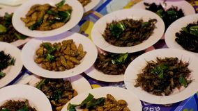 Different types of Cooked insects on a plate at night food market. Asia, Thailand, Pattaya. Different types of Cooked insects on a plate at night food market stock footage