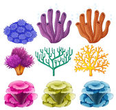 Different types of coral reef royalty free illustration