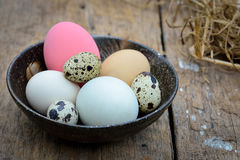 Different types of eggs in bowl on wood table Stock Photography