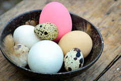 Different types of eggs in bowl on wood table Royalty Free Stock Photos