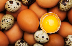 Different types of eggs Stock Photos