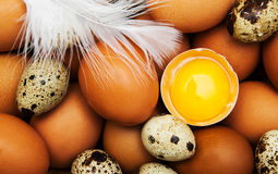 Different types of eggs Royalty Free Stock Photo