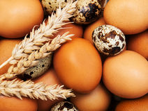 Different types of eggs Stock Photo