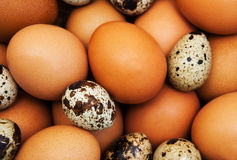 Different types of eggs Stock Photography