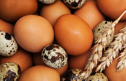 Different types of eggs Stock Image