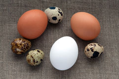 Different types of eggs on hessian linen fabric. Different types of eggs composition on hessian linen fabric cloth texture background Royalty Free Stock Image