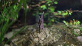 Different types of fish in aquarium stock video
