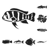 Different types of fish black icons in set collection for design. Marine and aquarium fish vector symbol stock web. Different types of fish black icons in set Stock Image