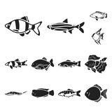 Different types of fish black icons in set collection for design. Marine and aquarium fish vector symbol stock web. Different types of fish black icons in set Stock Photo