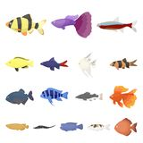 Different types of fish cartoon icons in set collection for design. Marine and aquarium fish vector symbol stock web. Different types of fish cartoon icons in Royalty Free Stock Image