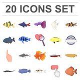 Different types of fish cartoon icons in set collection for design. Marine and aquarium fish vector symbol stock web. Different types of fish cartoon icons in Stock Image