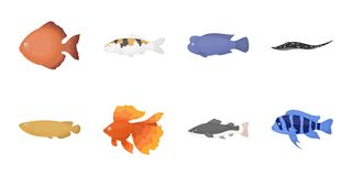 Different types of fish icons in set collection for design. Marine and aquarium fish vector symbol stock web Stock Image