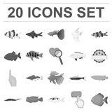 Different types of fish monochrome icons in set collection for design. Marine and aquarium fish vector symbol stock web. Different types of fish monochrome icons Royalty Free Stock Image