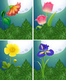 Different types of flowers on fullmoon night Stock Photos