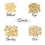 Different types of grain. Cereal. Different types of grain. Vector illustration EPS 10 Royalty Free Stock Images