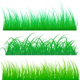 Different types of green grass isolated on white background. Vector illustration stock illustration