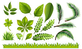Different types of green leaves and grass Royalty Free Stock Photo