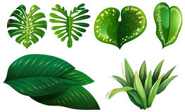 Different types of green leaves Stock Photos