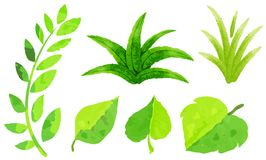 Different types of green leaves in watercolor painting Royalty Free Stock Photo