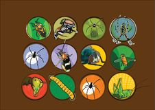 Different types insects illustration vector royalty free stock photos