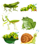 Different types of insects in green color vector illustration