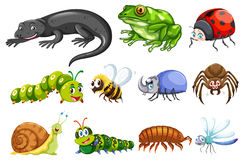 Different types of insects vector illustration