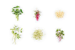 Different types of micro greens on white background. Healthy eating concept of fresh garden produce organically grown as Royalty Free Stock Photography