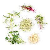 Different types of micro greens on white background. Healthy eating concept of fresh garden produce organically grown as Stock Photography