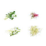 Different types of micro greens on white background. Healthy eating concept of fresh garden produce organically grown as Stock Image